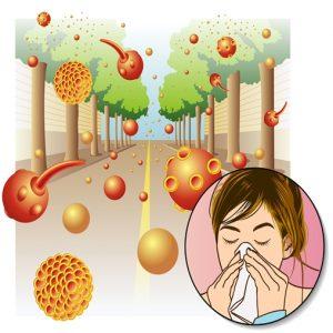 Allergies pollen1